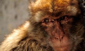 Маймунски работи…