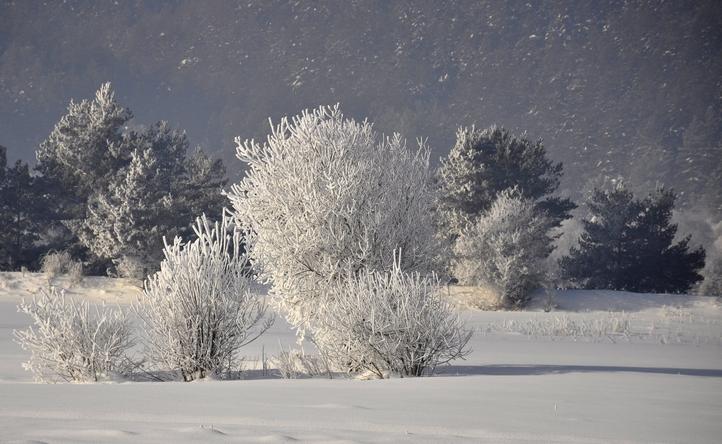 Снежни дървета
