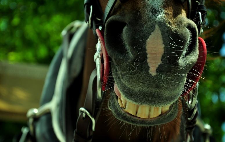 кон с усмивка