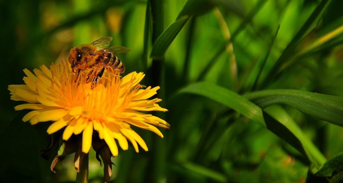 Да поснимаме пчелички