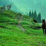 На разходка до връх Васил Левски