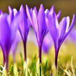 Пролетно килимче