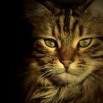 Любопитно за котките