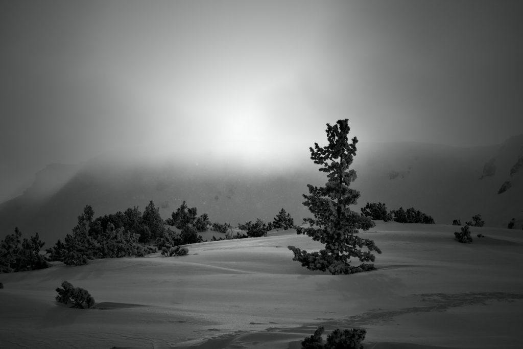 самотно дърво, черно-бяло