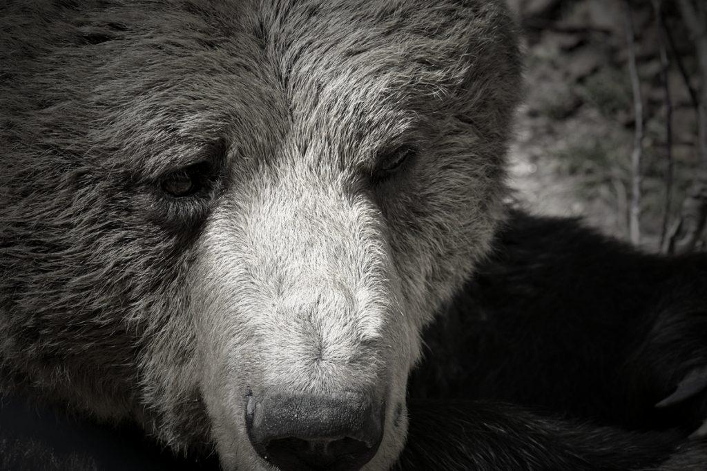 Парк за мечки Белица