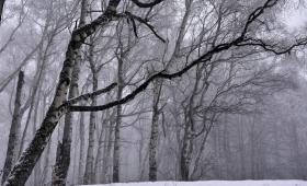 Снежна разходка