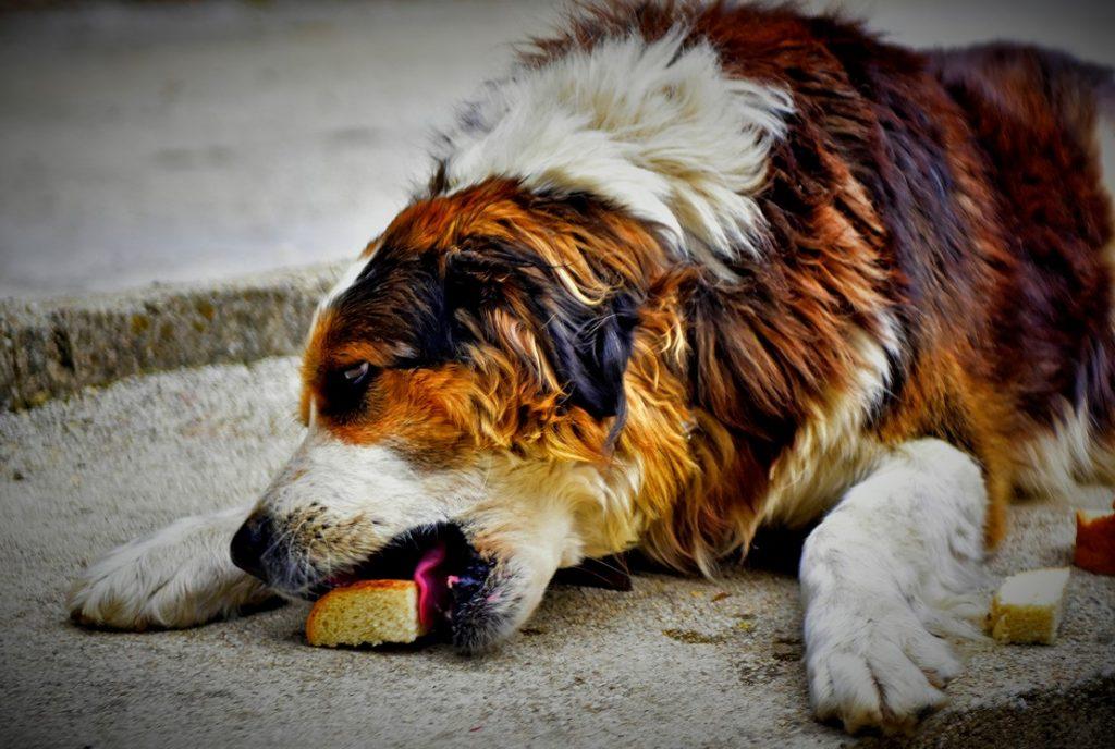 куче хапва хлебче