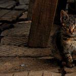 Световен ден на бездомните животни