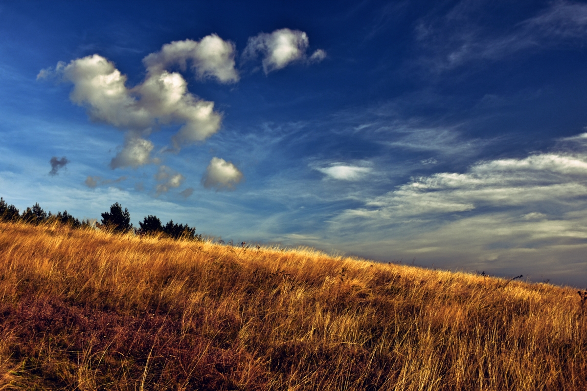 витошки облачета