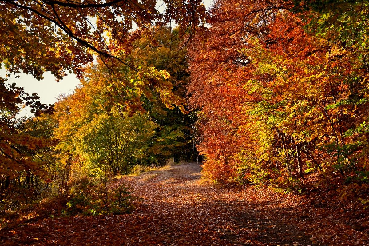 горската пътека