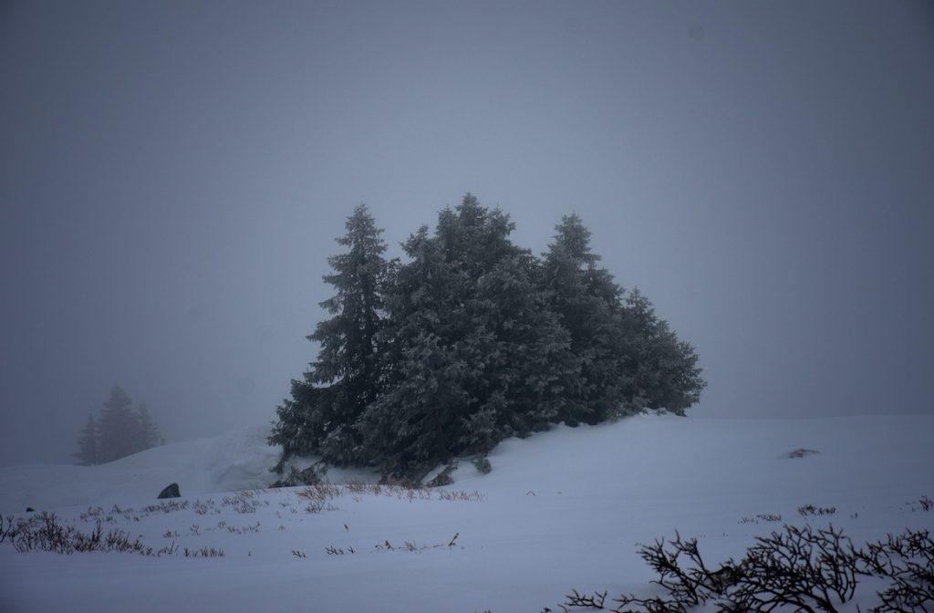последните дървета