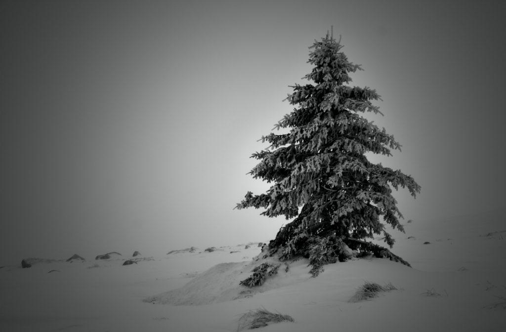 Самотната елхичка